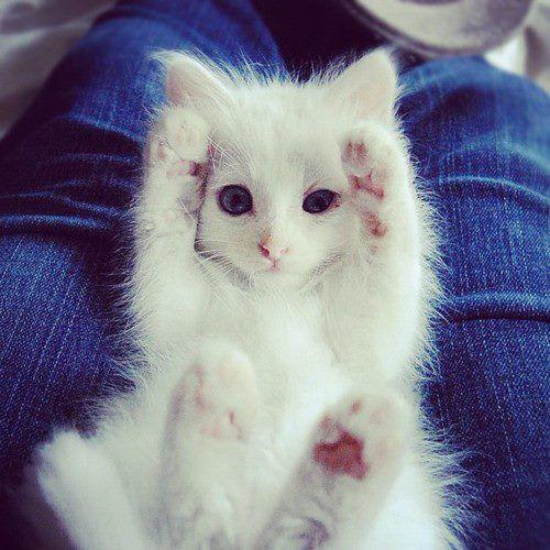 cat # so cute