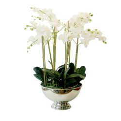 SIL148 phalaenopsis orchid arrangement in silver pot