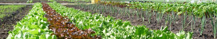 Urban Farming - de toekomst?