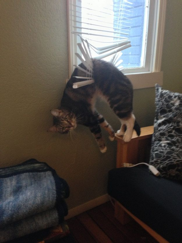 The cat who doesn't understand why you're staring. | The 22 Most ¯_(ツ)_/¯ Cats Of All Time