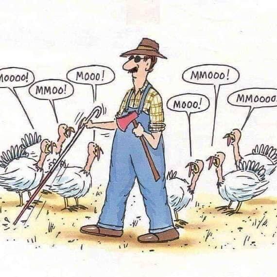Moo Funny Thanksgiving Memes Thanksgiving Cartoon Thanksgiving Quotes