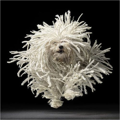 when having a rough one, just take a look at this, it'll brighten your day. komondor.