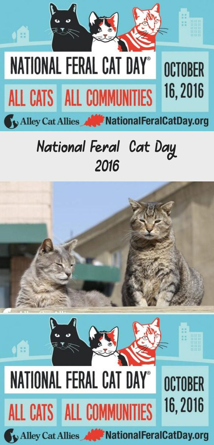 National Feral Cat Day 2016 Cat day, Feral cats, Cats