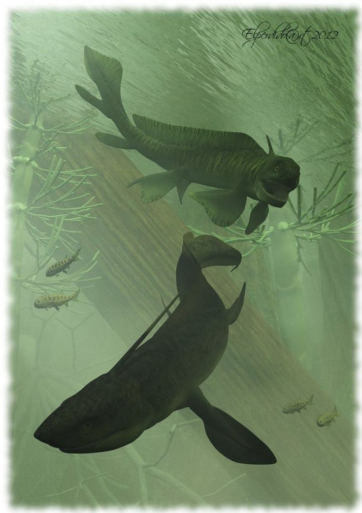 In a fresh water lake of the Permian, is pursuing a 3m long Orthocanthus a 1 m long Xenacanthus.