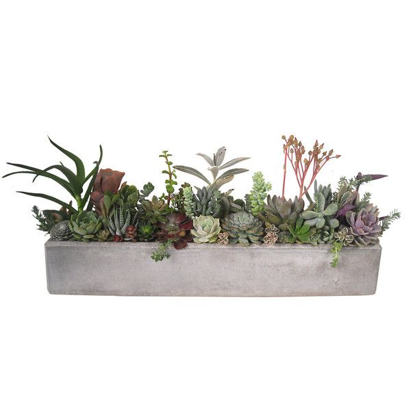 Succulent Concrete Arrangement Centerpiece 24