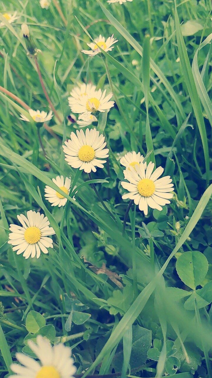 TURKEY-Karabük  🌞Papatyasız ilkbahar mı olurmuş?⛅