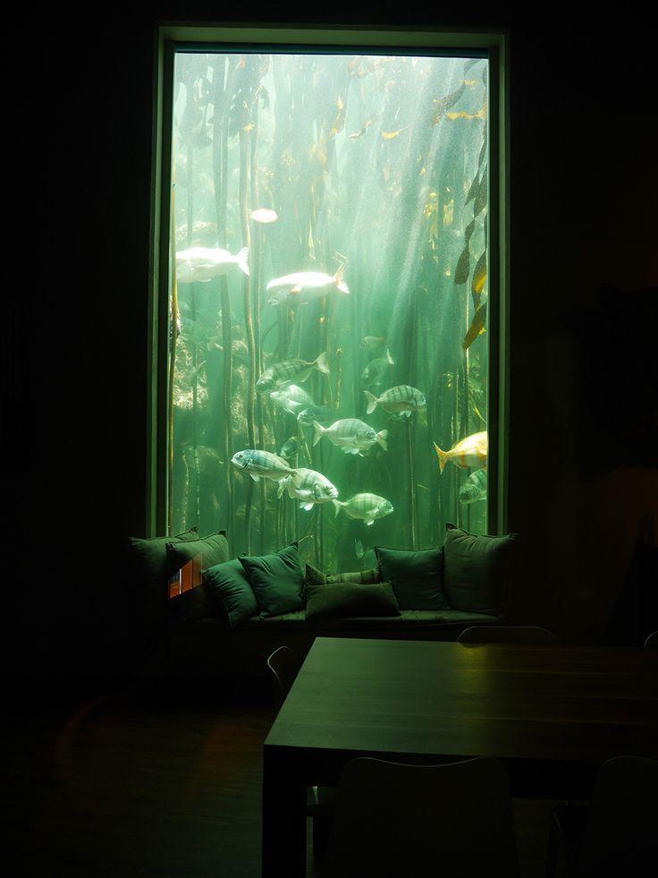 aquarium des deux océans