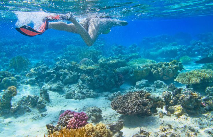 What a wonderful experience it was. Snorkeling nearby the blue hole in Dahab
