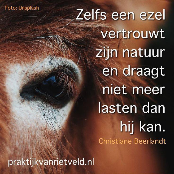 Zelfs een ezel vertrouwt zijn natuur en draagt niet meer lasten dan hij kan - Christiane Beerlandt
