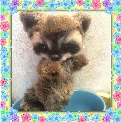 Raccoon-Joy-Toy-OOAK-by-Kaledina-Natalia