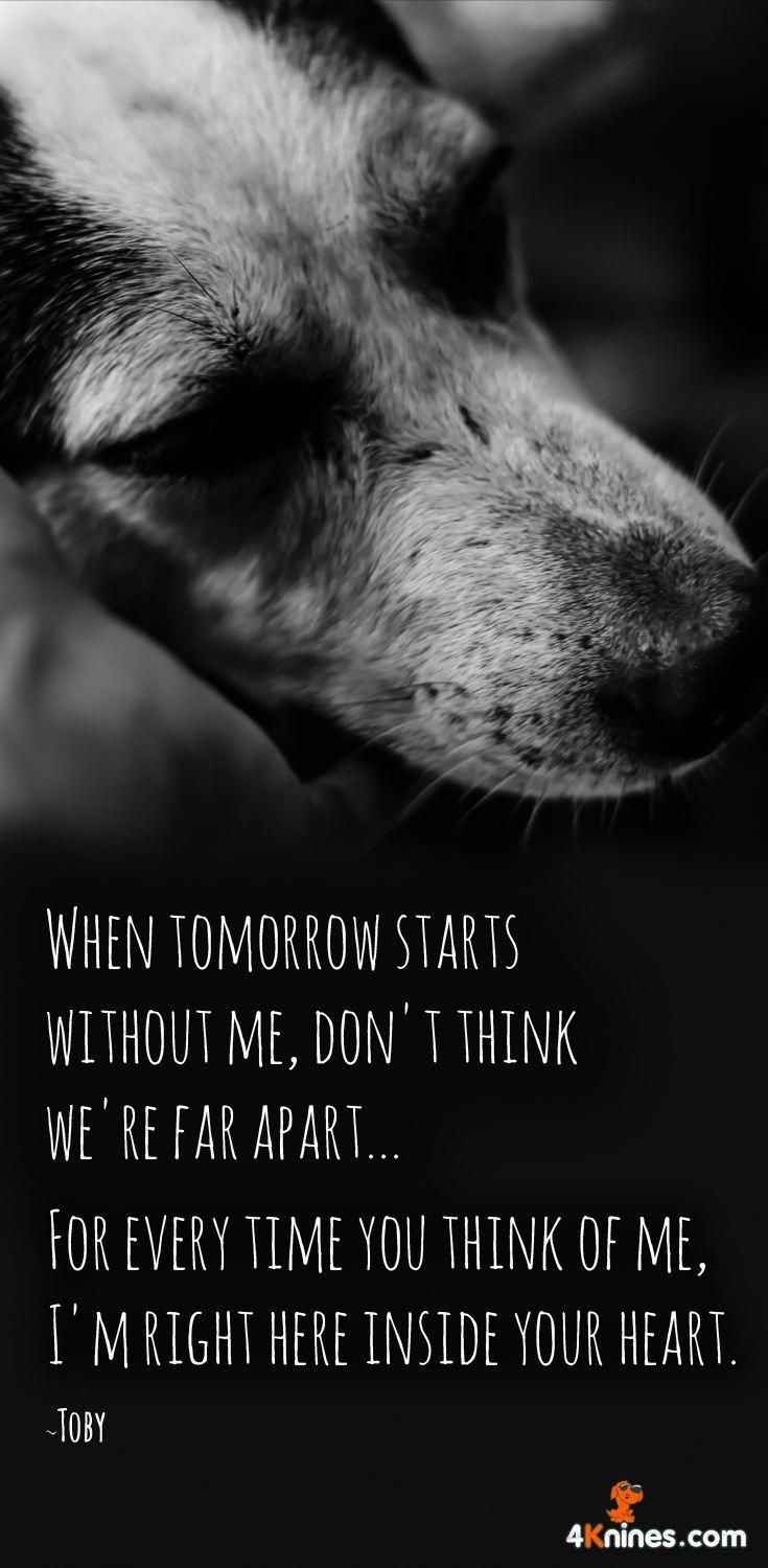 I Miss You More Than I Could Ever Explain I Crave For One More Kiss One More Hug One More Silly Action From You Dog Quotes Old Dog Quotes Miss