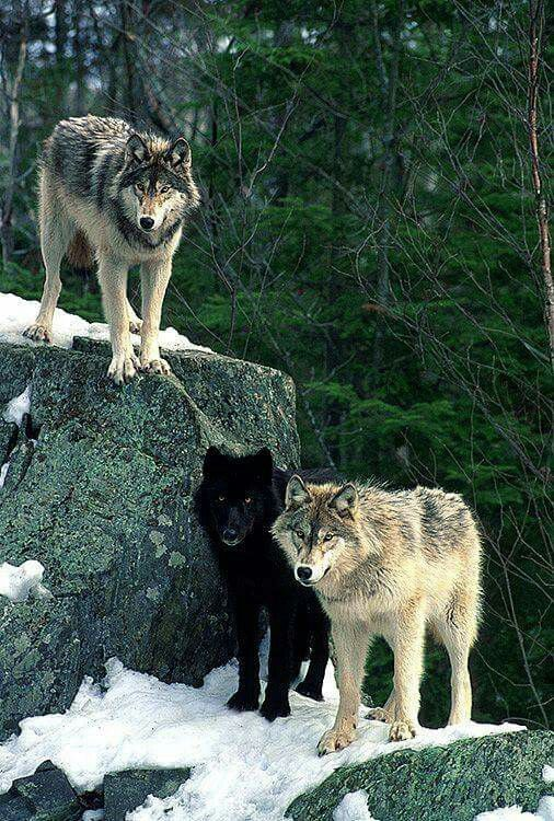 God, they're quite intimidating. So beautiful.
