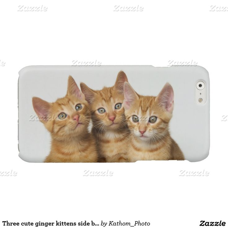 Three cute ginger kittens side by side glossy #iPhone 6 case  photographed by Katho Menden #cute