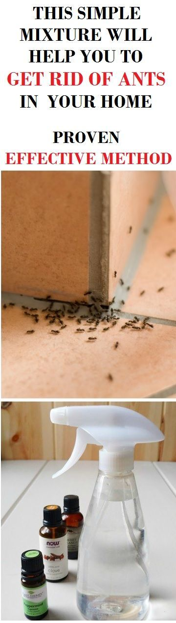 how to get rid of ants on your deck