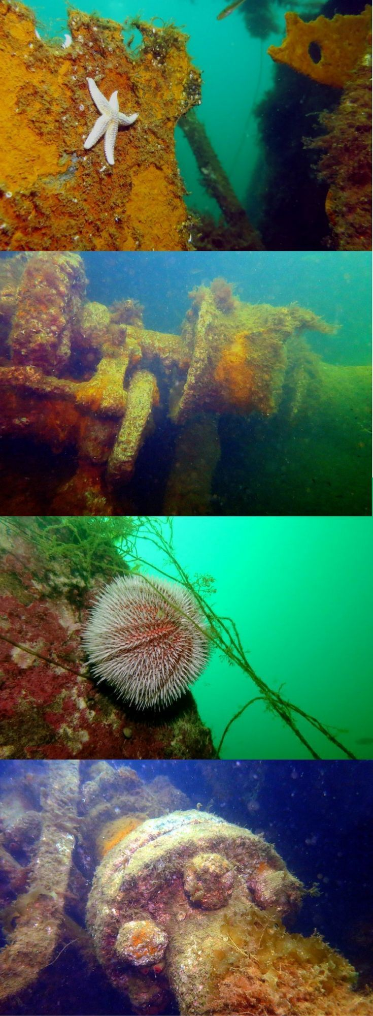 Scuba Diving in Churchill Barriers - A scuba diving road to Scapa Flow, Orkney Islands, Scotland, UK – World Adventure Divers – Read more on https://worldadventuredivers.com/2015/10/17/a-scuba-road-trip-to-scapa-flow-orkney-scotland/ #scubadivercostumes