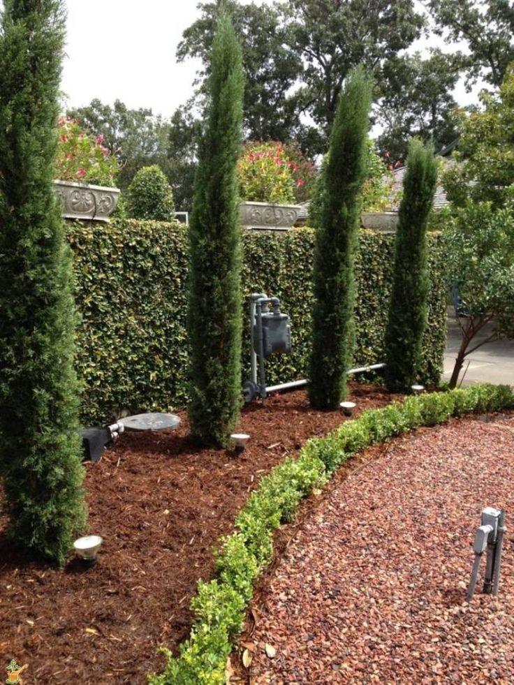 Backyard Italian Cypress Landscape Slubne Suknie Info