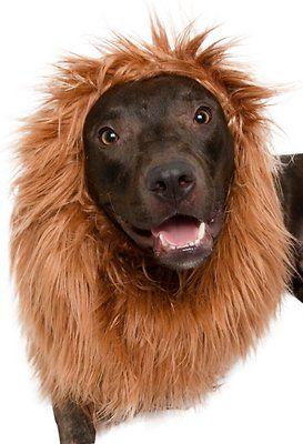 Pet Krewe Big Dog Lion Mane - Chewy.com