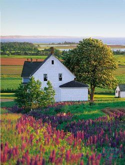 "Prince Edward Island - Would love to see for my self the ""Lake of Shining Waters"" and ""White Way Delight""!"