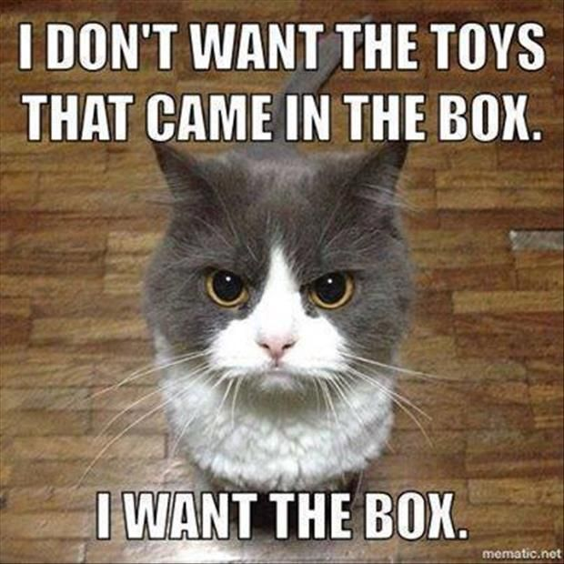I stopped buying toys for my cats.  I just bring home different sizes of boxes, lol.
