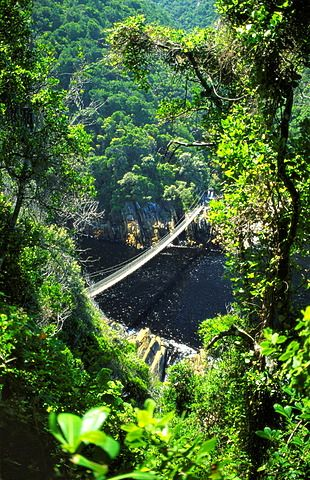 Footbrige Over Storms River, Tsitsikamma National Park, South Africa
