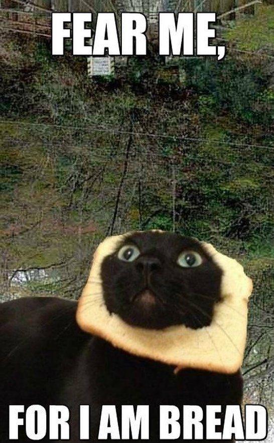 Bread cat - www.meme-lol.com | Funny | Pinterest | I am ...
