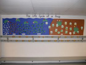 The Sharpened Pencil: Life Cycle of a Frog