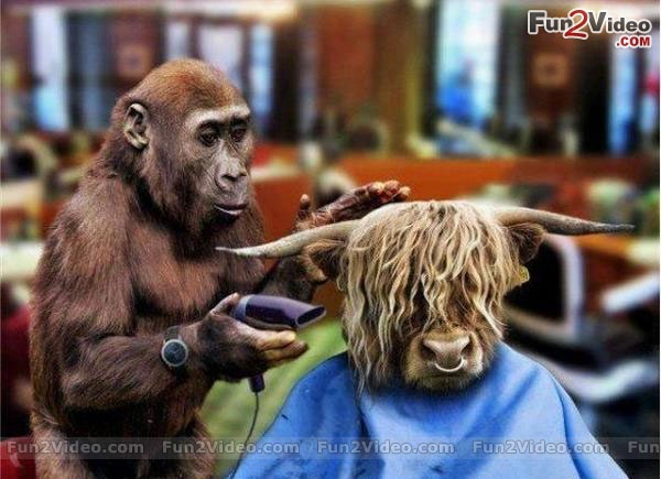 Funny Barber For Perfect Haircut [ More Funny Animal Pics ...