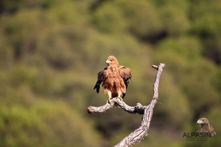 ¡Ven a #SierraMorena esta semana y vive una experiencia con nuestra biodiversidad!