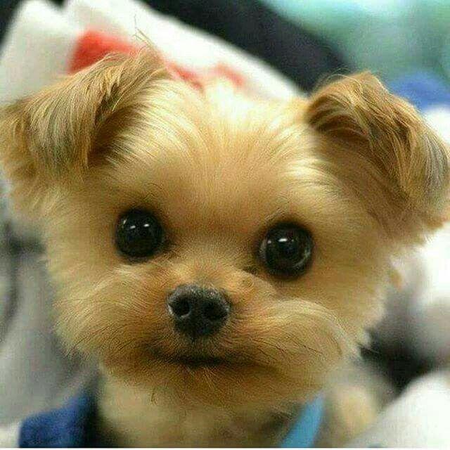 Go to CuteFTW.com for cute stuff!!!