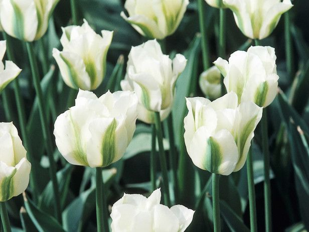 hgtv gardens offers step by step for layering flower bulbs for a gorgeous spring flower