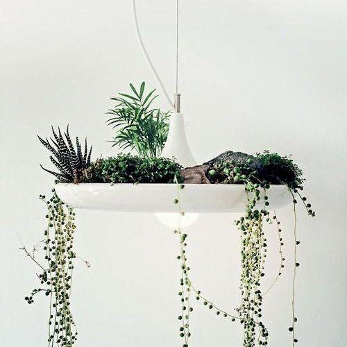 Jardin d'intérieur dans une suspension / An indoor garden in a lamp