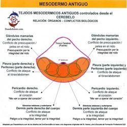 Nueva Medicina Germanica Hamer NMG Leyes Biologicas 5LB Tablas Mesodermo Antiguo Capa Embrionaria