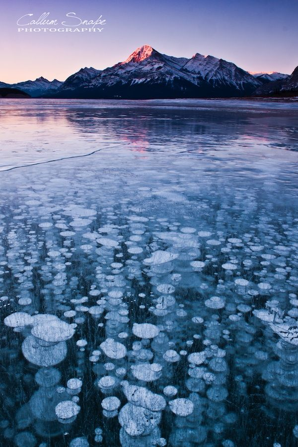 Frozen Bubbles Suspended Below Abraham Lake Abraham Lake has become world famous,