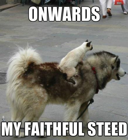 Onwards, my faithful steed