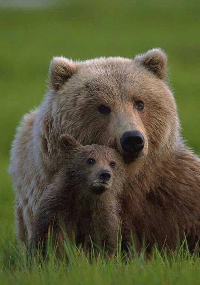 также фото настоящих медведей цукатов арбузных