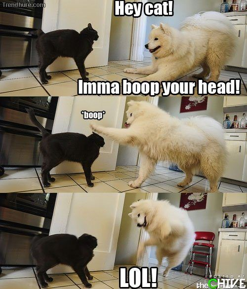 I swear my dogs do that...: Make Me Laughing, Dogs And Cat, Hey Cat, Silly Dogs, Dogs Cat, Funny Stuff, Funny Animal, Imma Boop, So Funny