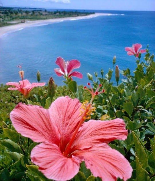 Paling Populer 30 Lukisan Bunga Sepatu Merah Gambar Lukisan Bunga Raya Dalam Roses And Lilies Fantin Latour Menggunakan B Di 2020 Bunga Eksotis Hawaii Lukisan Bunga