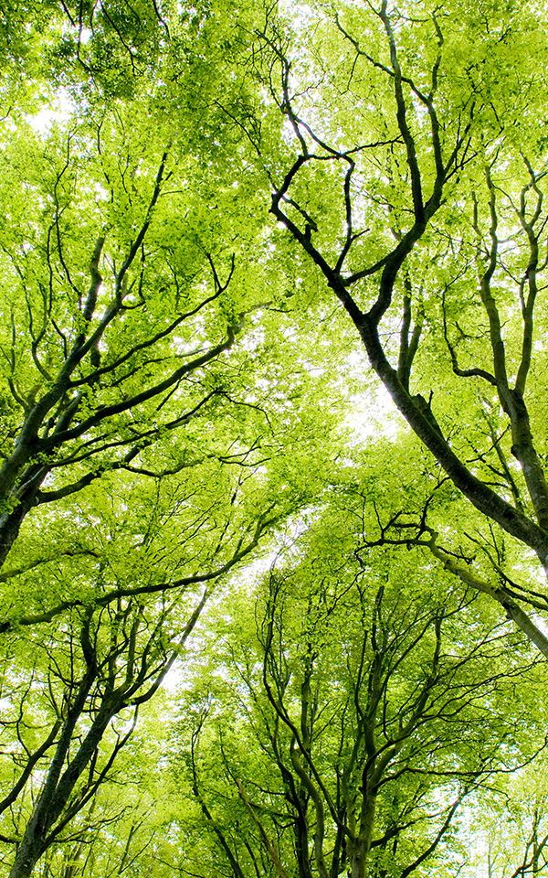 Design A Beautifully Nature Inspired Living Room With These Green Tree Living Room Wallpapers The Vibra Nature Photography Trees Forest Wallpaper Green Nature