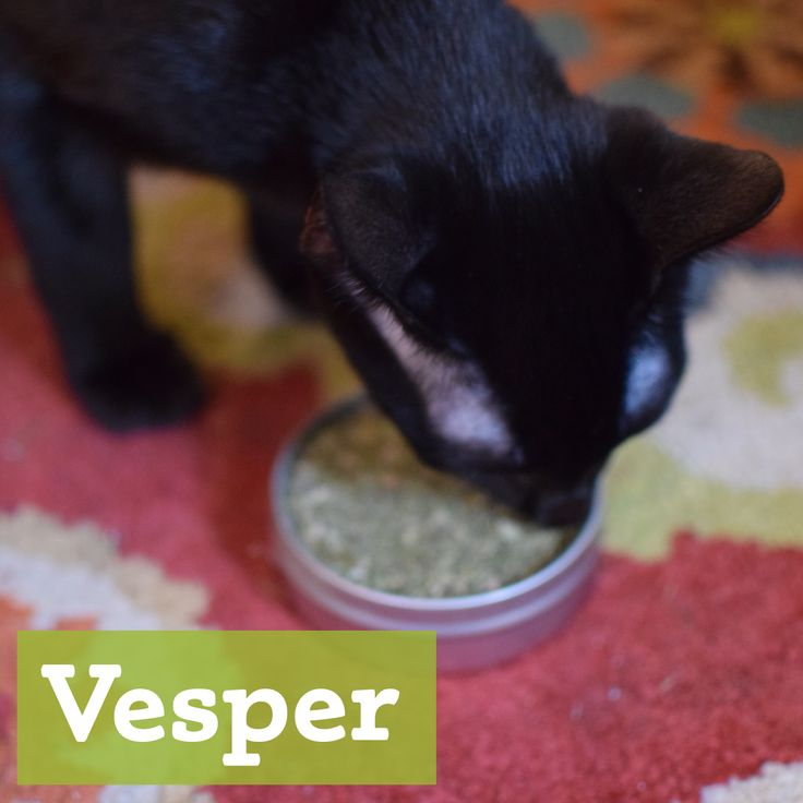Vesper loves our organic catnip!  Find it here: http://etsy.me/1gT0iF9