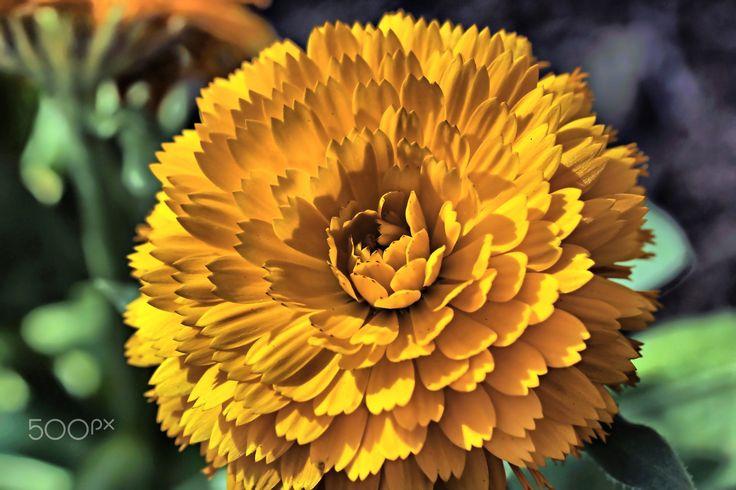 flower by Joe Gumont