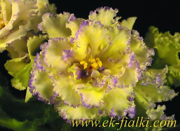 ЕК - Вальс Цветов