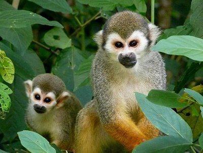 aapjes in de tuin. ze zijn zo schattig