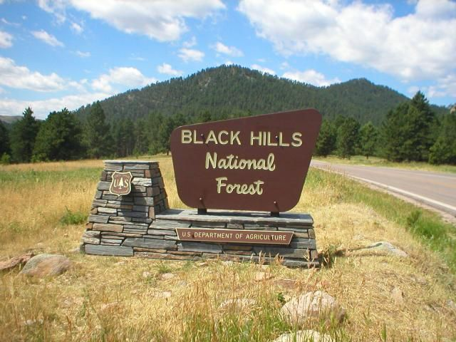Black Hills National Park | Day Five -- Wind Cave; Custer State Park; Black Hills;Mount Rushmore ...