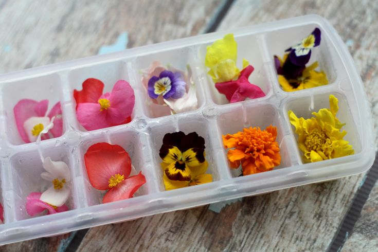 DIY: ice cubes with edible flowers