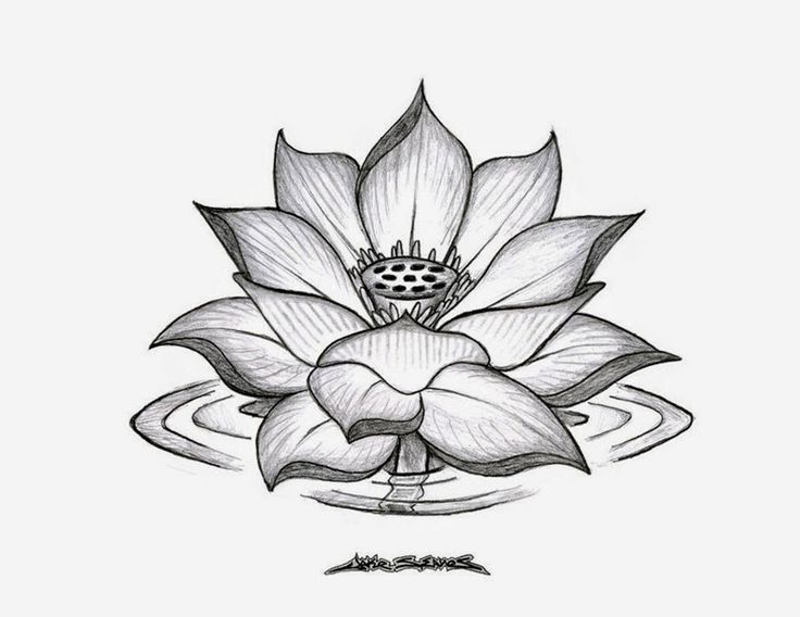 Gallery of amazing drawings of flowers 33 flower drawing step by