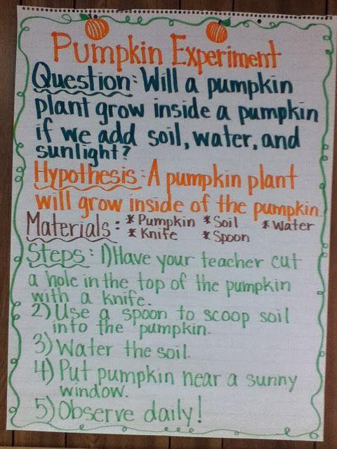 Grow a pumpkin inside a pumpkin science experiment