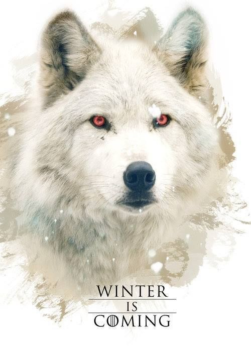 Ghost   Game of Thrones   Game of Thrones Wallpaper  