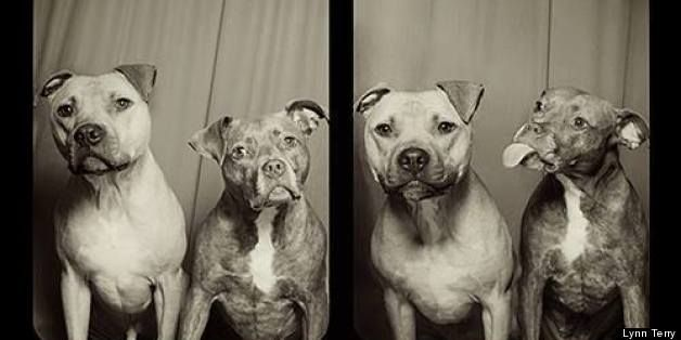 This is what happens when you put two Pitt bulls in a photo booth...