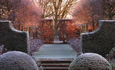 Wollerton Old Hall, Shropshire: Winter Garden In Frost - View Along The Lime Allee At Dawn To A Clipped Beech Hedge, With Clipped Box And Tilia Platyphyllos 'rubra' Postcards, Greetings Cards, Art Prints, Canvas, Framed Pictures, T-shirts & Wall Art by Clive Nichols