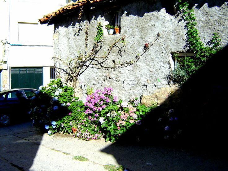 Hermoso rincón de Piornal lleno de flores.